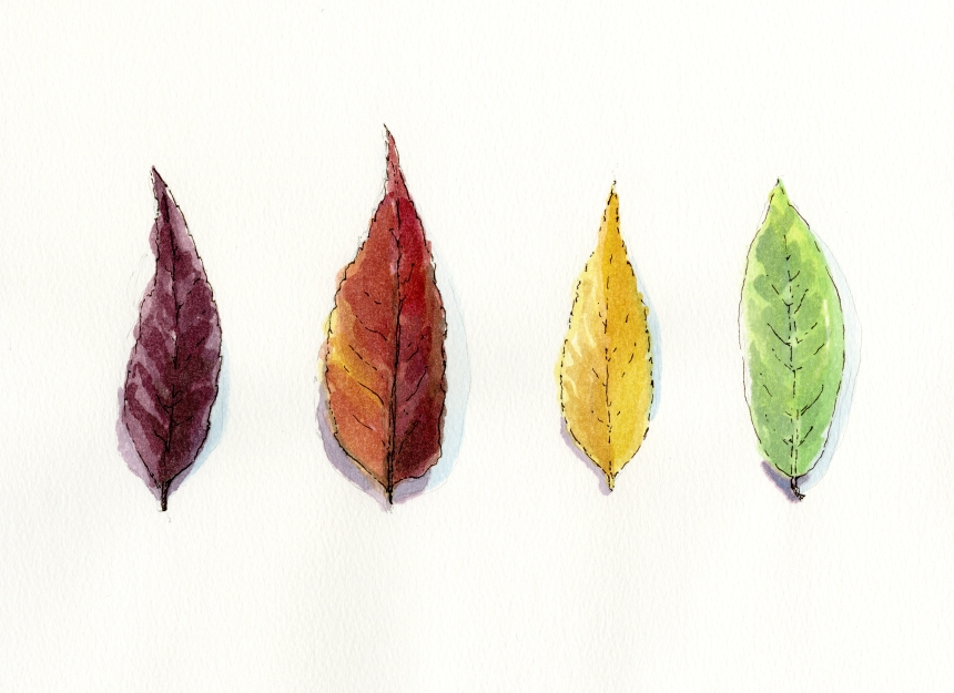 Autumn Leaf Color Study