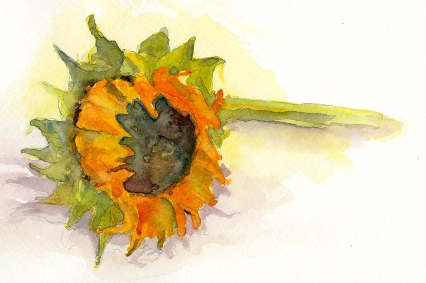 Watercolor - Wilted Sunflower - Artist Rebecca J Stahr
